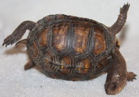 Turtle. Stock ,, of 29 by Lovely-DreamCatcher