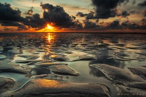Reclaim by Oer-Wout