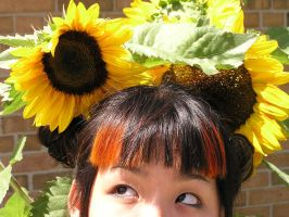 stock 729: sunflowerhead by sophiaastock