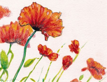 Red Poppies by KingVahagn