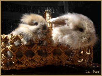 A Basket for Two by La-Puce