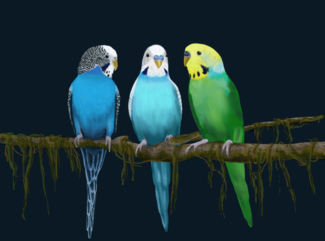 Parakeets WIP by Valanee