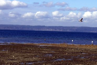 Dash Point Seagull 1 by infin8yquest