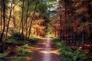 The way back home by Pajunen