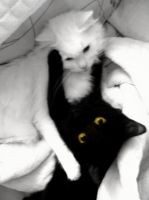 Black and White by flauel