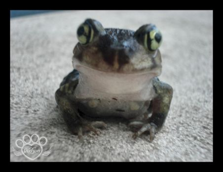 Happy Frog 1 by AshlieNelson