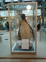 King Penguin Taxidermy by Louisetheanimator