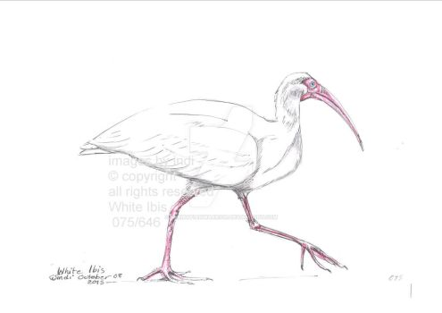 WhiteIbis075 by SarmatianWarrior