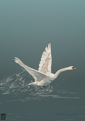 White Mute Swan - Commission by FionaCreates