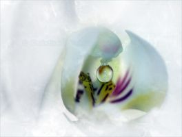 white angel by dini25