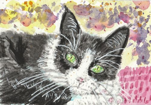 Skitty  cat  watercolor ACEO original painting by tulipteardrops