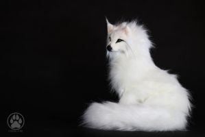 NFS White Wolf Immie Poseable artdoll OOAK! by CreaturesofNat