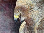Golden Eagle by Icearstorm