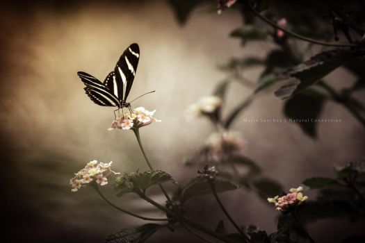 Butterfly Nature by MCN22