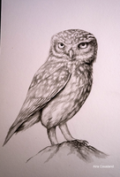 Owl - Ink by AiraCousland