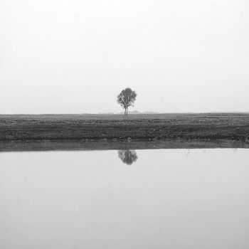 Reflection of Tree by Rohypnolformen