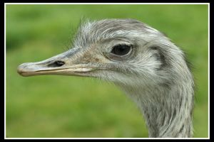 Emu by Spree5326
