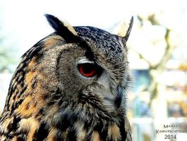 Eagle Owl Portrait by Elvenlight