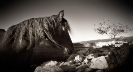 horse with no name... by denis2