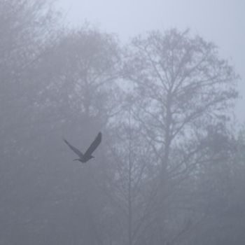 Crow in the mist 3064 by filmwaster