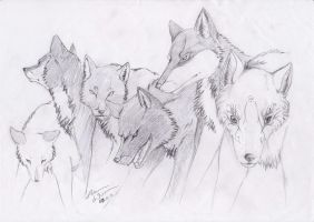 Off-white Wolves by GureeOokami