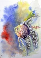 Watercolor angelfish by mandylynn