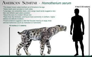 Homotherium_wikipedia by Dantheman9758