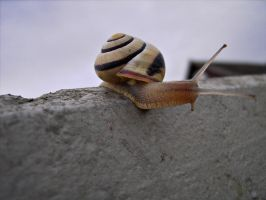 Animal Collection: Snail by Germanstock