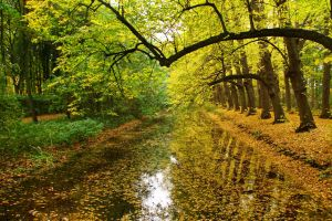 Autumn In The Air by Harry-Paraskeva