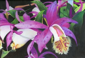 Orchids for Deb by OdinPeterson