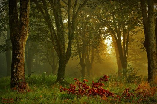 Forest of linden by LillianEvill