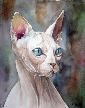 Sphinx cat by Kajko