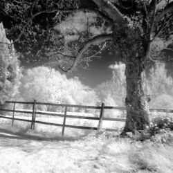 The fence and the tree by nibbler-photo