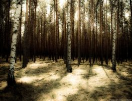 among the trees... by Karolaxd