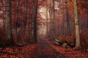 In the autumn forest by ArkanumTenebrae