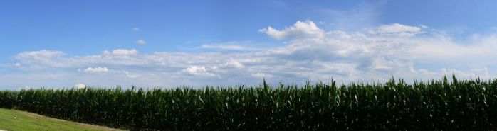 Panorama of corn 1 by AndersW