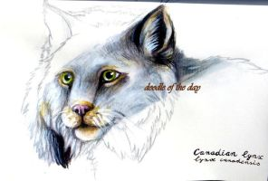 #219 Canadian Lynx (lynx canadensis) by LateAMdoodles