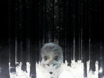WOLF IN SNOW FOREST by AlternateCore