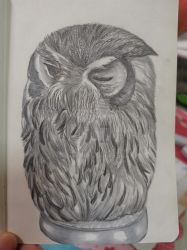 white-faced owl practice