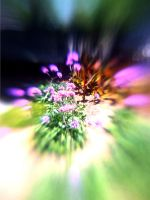 Lensbaby iPhoneography CCXLVI by LDFranklin