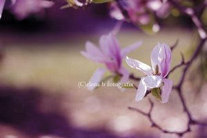 Born to resist the time of a goodbye by Pensieri