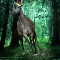 Avatar ~ King of the Mearas by Liberty-Designs