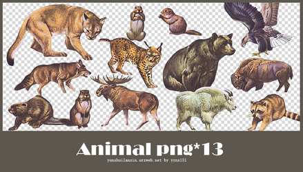 Animal png pack #01 by yynx151