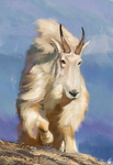 Mountain goat study by RobertoGatto