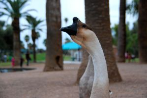 Goose head by oddjester