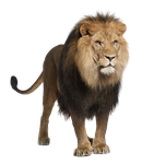 Lion Stock 1 PNG by Gilgamesh-Art