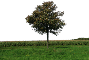 tree and grass 46 png by gd08