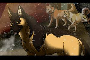 Madison: I Was Wrong. by Sedillo-Kennels