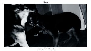 My dogs by elka