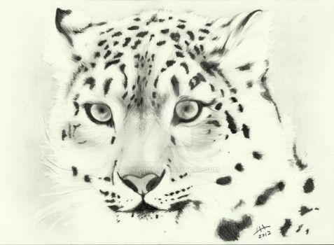Snow Leopard by Cayasha